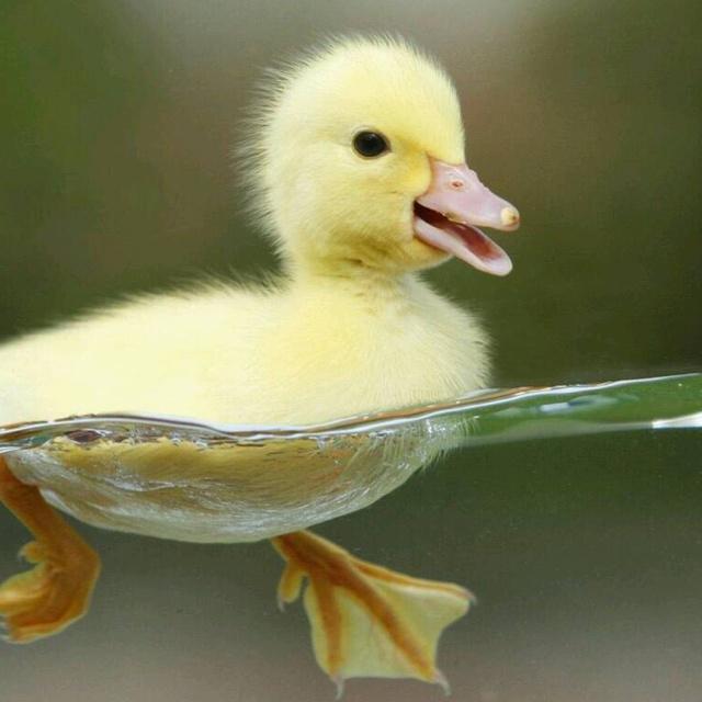 你笑个鸭儿?