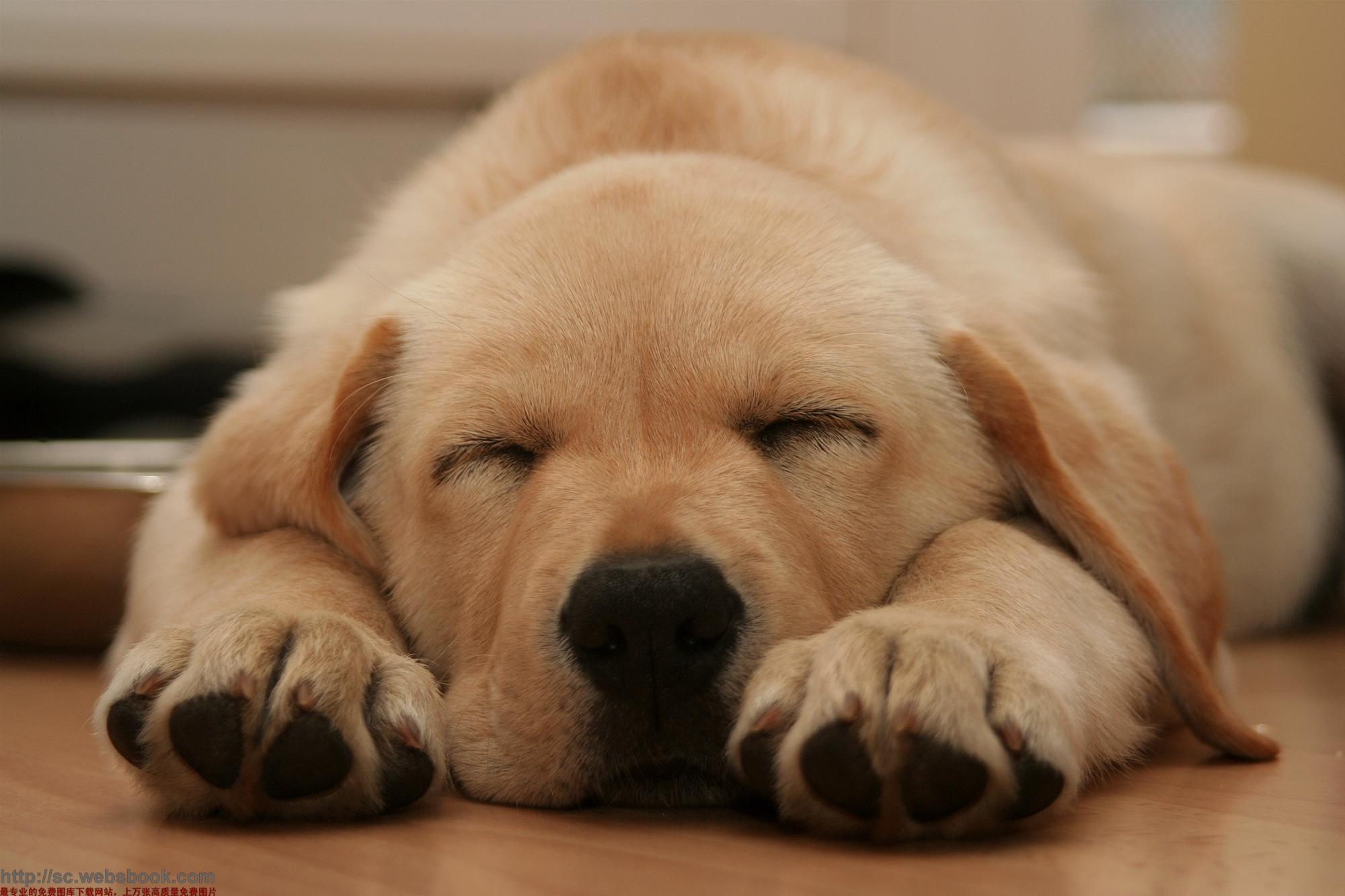 睡觉的动物图片大全