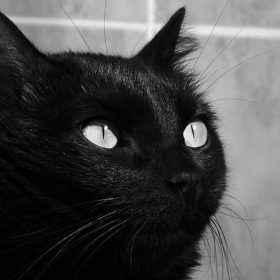 生活 黑猫/黑猫的守侯。
