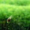 背景音乐-雨天悠闲版