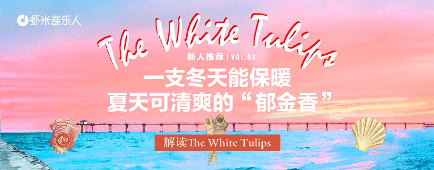 新人推荐vol.02-解读twt