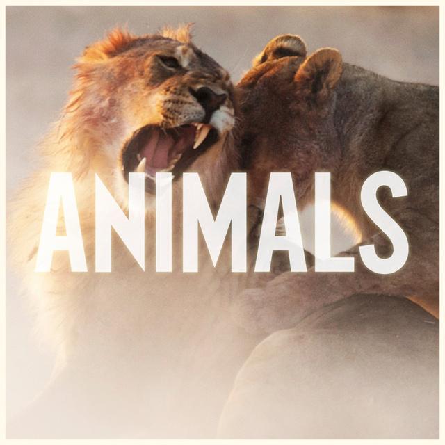 Animals – Maroon 5魔力红 在线音乐试听 mp3歌曲试听的照片 - 1